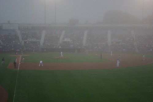 Seadogs in the Mist