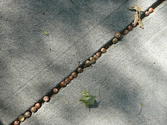 Acorns all in a row