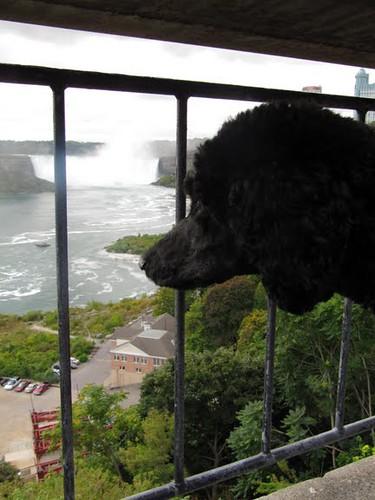 Yankee kijkt naar de watervallen