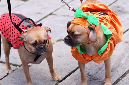 ladybug and pumpkin