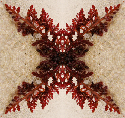 An abstract design made by mirroring a photograph of seaweed on a beach