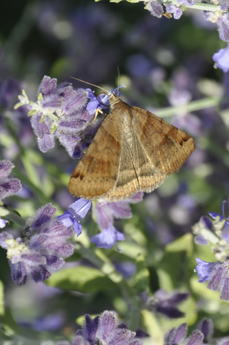 moth? butterfly? (c) Lynne Medsker