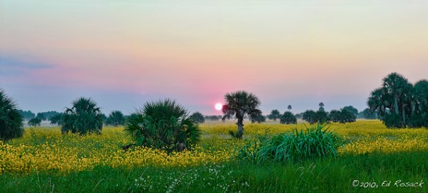 Lake Jesup Wildflower Panorama