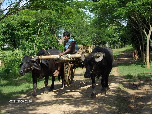 trip to bangladesh 243