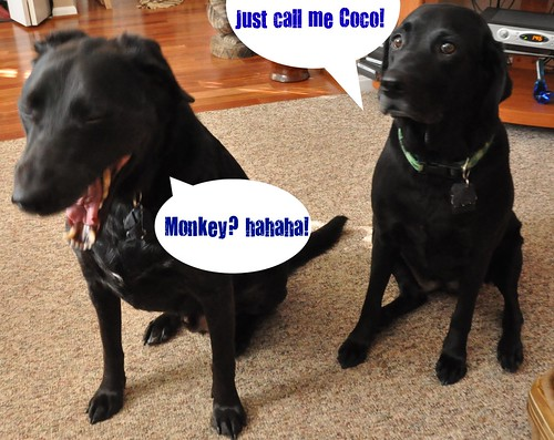 coco and monkey