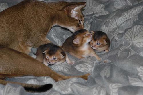 catalina+babies1