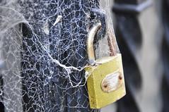 Secure Web [https://]