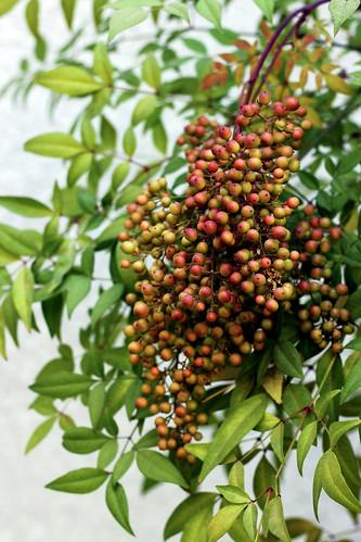 Heavenly-Berries