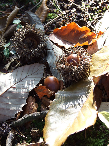 An oak