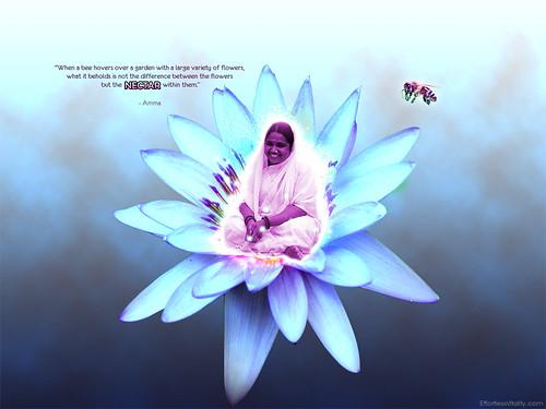 """Amma & Nectar Quote"" inspirational ..."