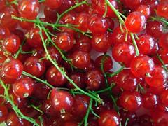 aalbessen / red currants / rote johannisbeeren