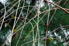 Hummingbird chilling