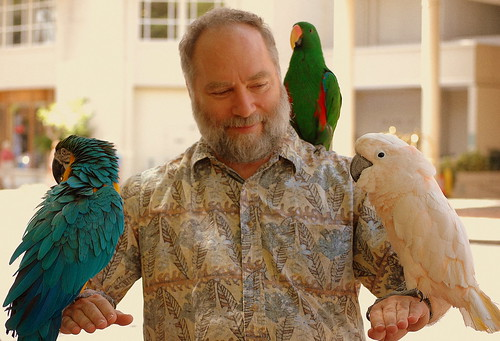 Amoeba & parrots
