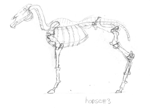 Horse skeleton, part 3