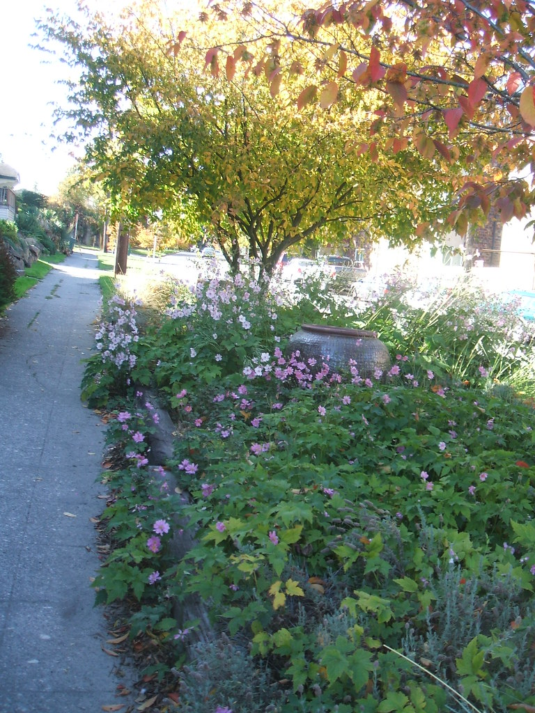 Unusual street garden with windflowers