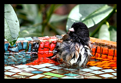 The Junco Jacuzzi by you.