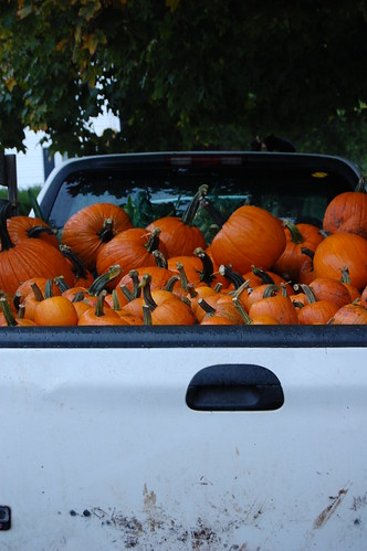 pumpkins in truck
