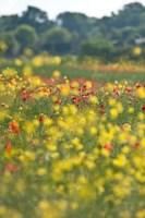 Wild flower meadow (3)
