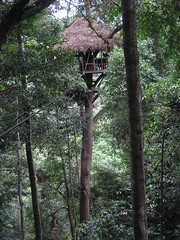 Our treehouse high above the ground at the Gibbon Experience