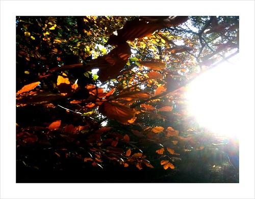 Wyre Forest Autumn VI