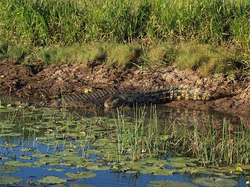 Clean croc
