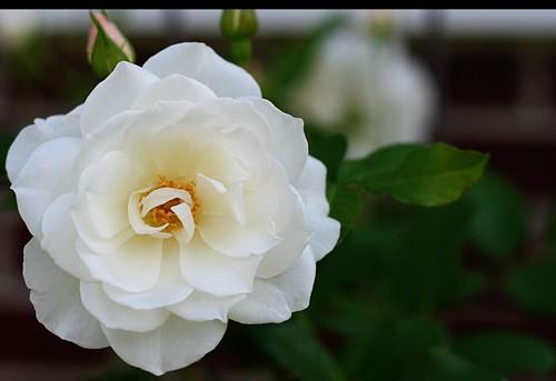Tammy's Flowers