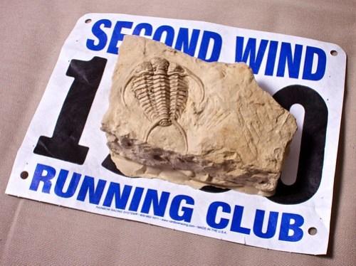 Trilobite fossil casting race award