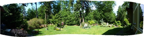 backyard panorama