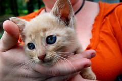 Barn kitten.  Such pretty eyes!