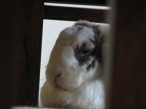 betsy's sourpuss face