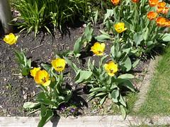 Garden of Aton 2009 - 41