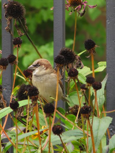Vogeltje in Toronto