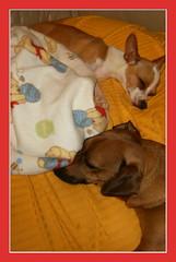 sleepingFriends