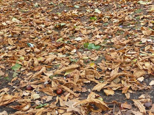 Autumn in Ealing!