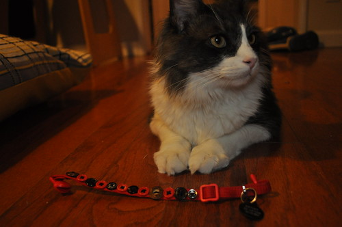 Henry's Collar