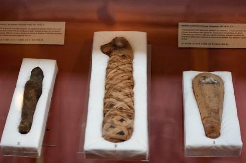 Mummified Falcon, Cat and Iris