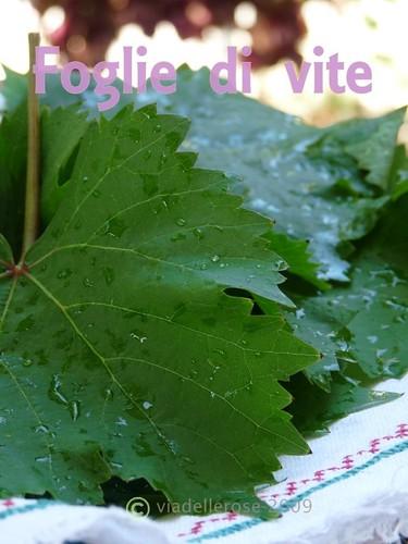 Foglie di vite - Feuilles de vigne