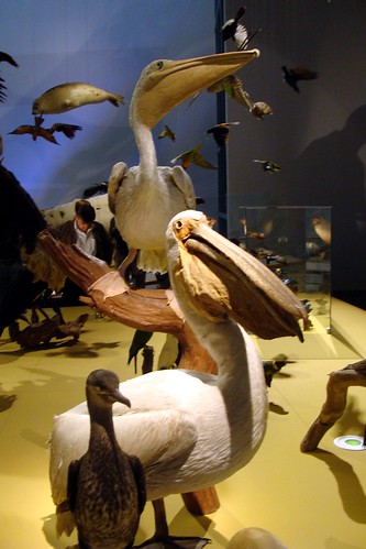The Natures Theatre gallery, Naturalis