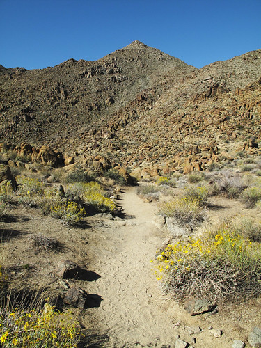 Twentynine Palms Oasis Trail by you.
