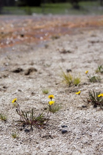 Snapshot: Flowers