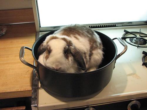 bad bunny stew