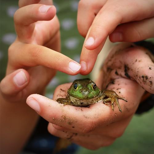 Hello Mr. Froggypants!