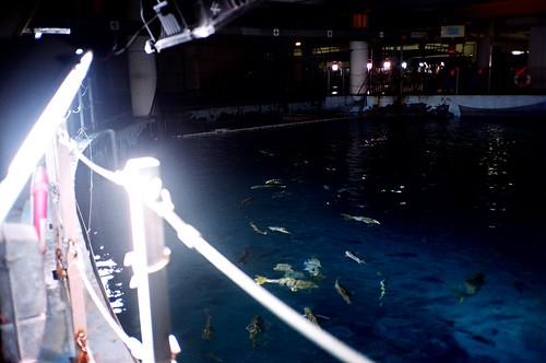 [海洋之夜]參觀大池子