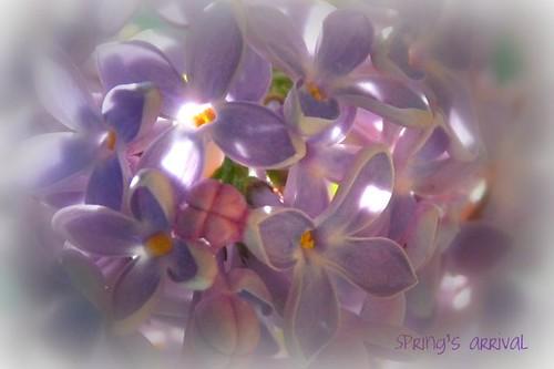 Flowers - Spring's arrival por blmiers2