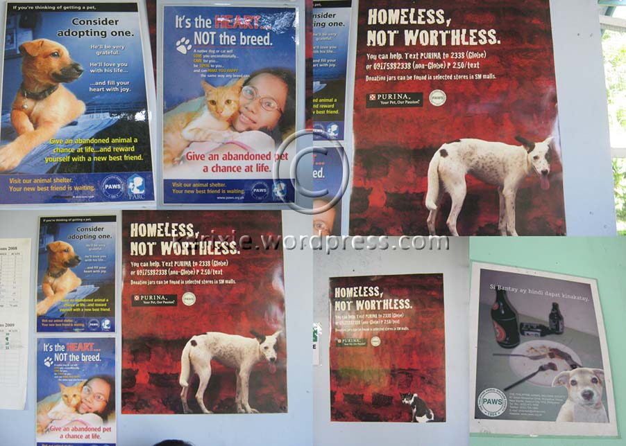 These are some of the posters you will see in the PAWS shelter