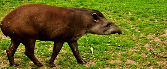 3743814139_833e591e63_o The Wildlife Park at Cricket St Thomas -  Chard Somerset, UK UK West Country  Wildlife UK Somerset Gardens