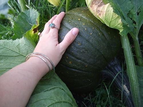 Pinky's Pumpkin & My Hand