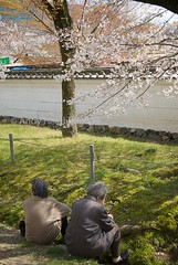 Elderly Couple Sitting Beneath Sakura Tree in ...
