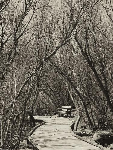Twiggy path by you.