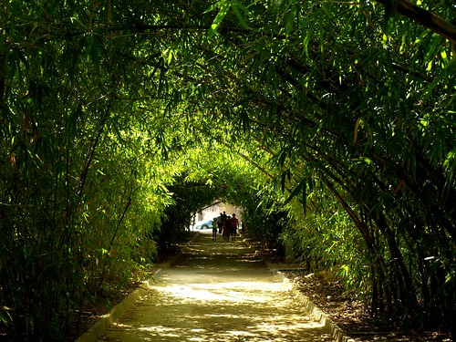 Bamboo Tunnel in the Centre of the City